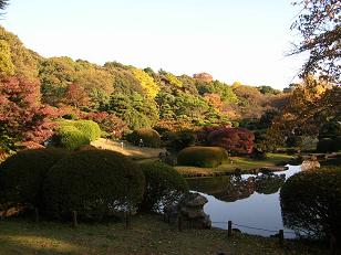 勤労感謝のご褒美 その三 小石川植物園 B _f0139963_22522749.jpg