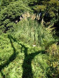 勤労感謝のご褒美 その三 小石川植物園 B _f0139963_23195433.jpg