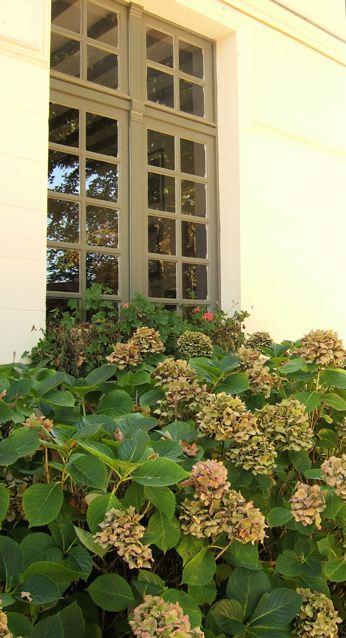 窓辺のドライフラワー(バルビゾンーフランス)_f0119071_18392769.jpg