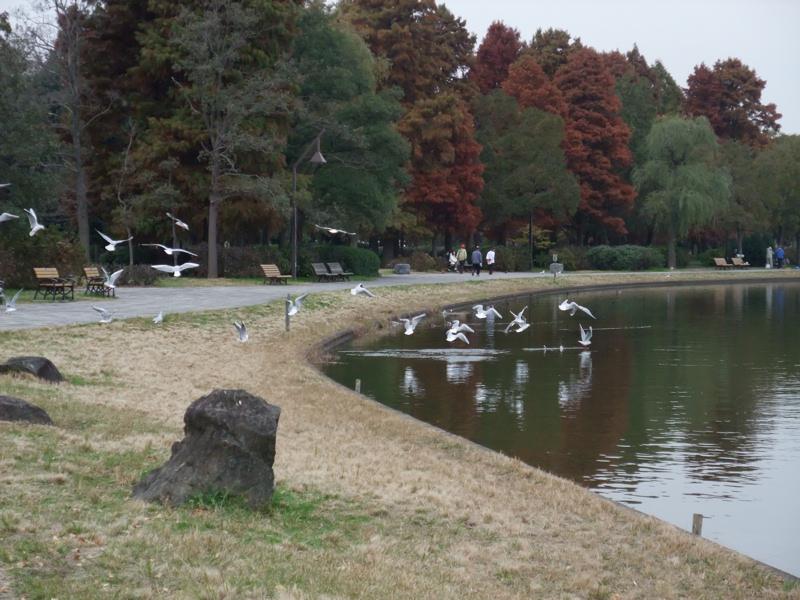 水辺の鳥たち_c0173978_14135488.jpg