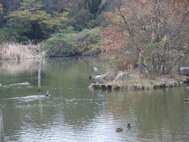 水辺の鳥たち_c0173978_14143598.jpg