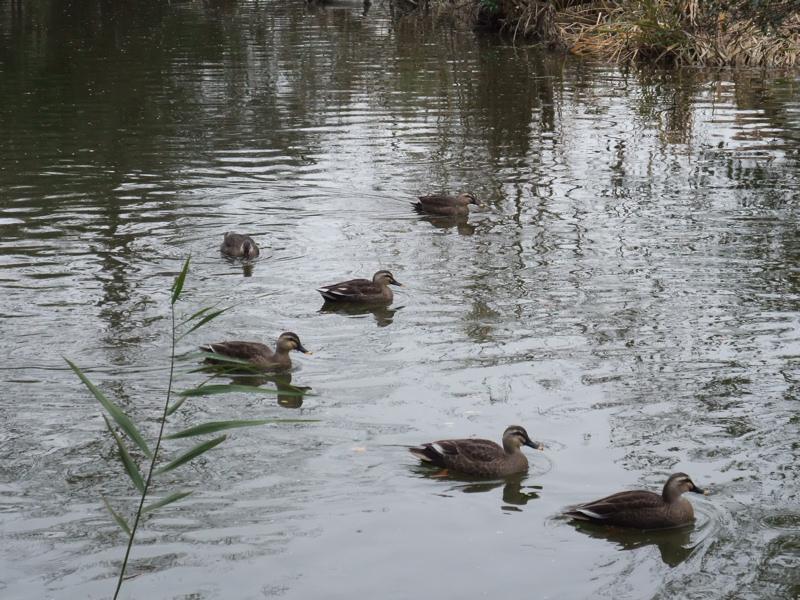 水辺の鳥たち_c0173978_14223951.jpg