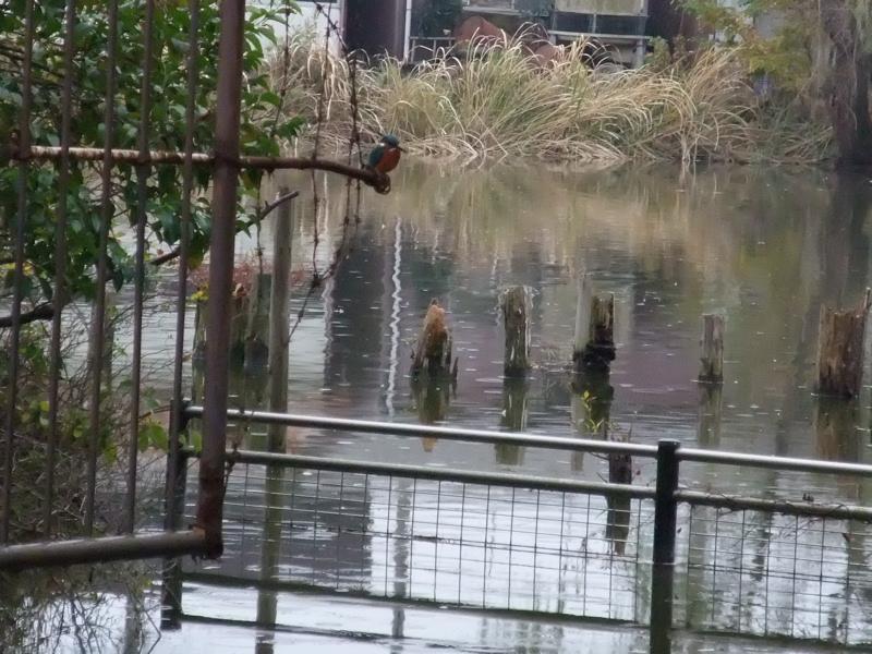 水辺の鳥たち_c0173978_14435118.jpg