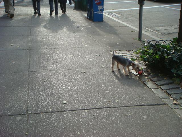 Broadway & 72nd St を散歩すると、_d0100880_1441090.jpg