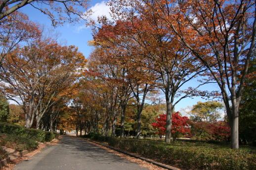 ★晩秋の万博記念公園へ_e0154682_23142537.jpg