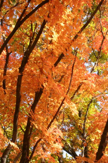 ★晩秋の万博記念公園へ_e0154682_23265548.jpg