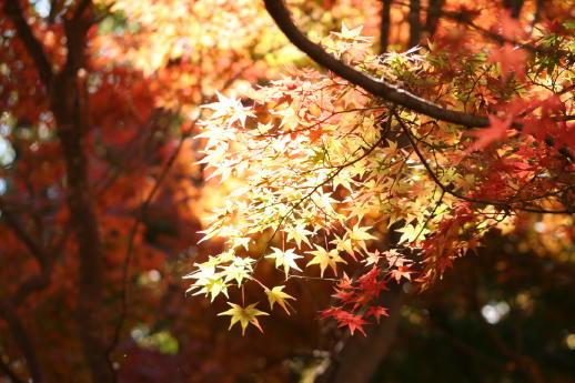 ★晩秋の万博記念公園へ_e0154682_23303063.jpg