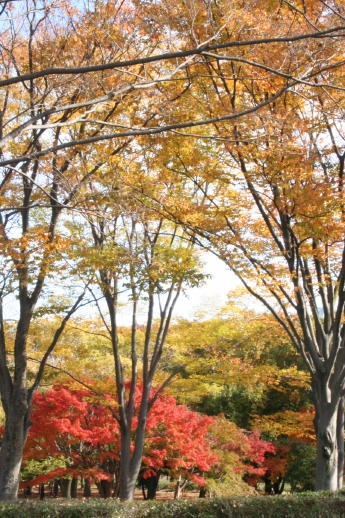 ★晩秋の万博記念公園へ_e0154682_23335342.jpg