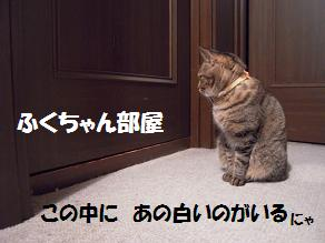 c0139488_16314579.jpg