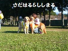 d0108890_15295914.jpg