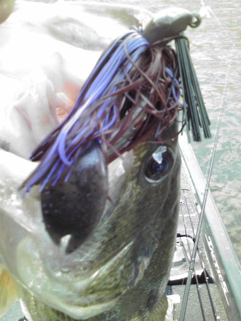 バイズフラッピンチャンクでBIG FISH!_a0097491_1893290.jpg