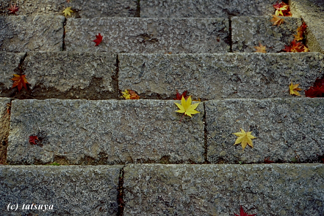 Nov.  26  (Wed)   紅葉 1_f0139991_2202370.jpg