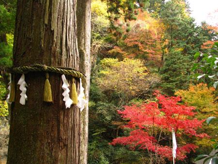 紅葉を訪ねて鞍馬 由岐神社_e0048413_21471218.jpg