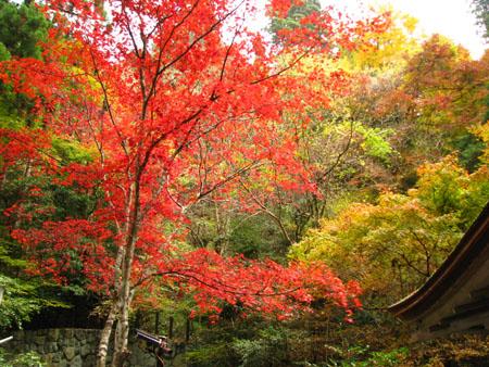 紅葉を訪ねて鞍馬 由岐神社_e0048413_21485330.jpg