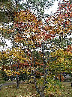 京都某所_c0025217_14593898.jpg
