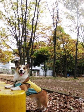 いつもの公園…_f0155118_21292543.jpg
