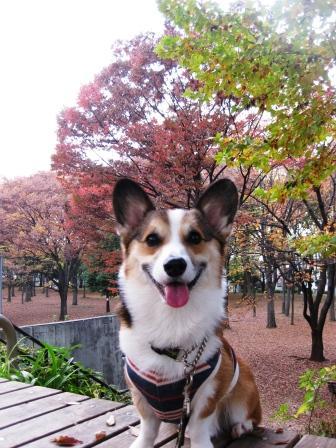いつもの公園…_f0155118_21304451.jpg