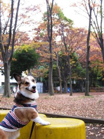 いつもの公園…_f0155118_21324893.jpg