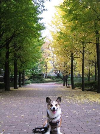 いつもの公園…_f0155118_21511642.jpg