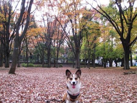 いつもの公園…_f0155118_2152297.jpg