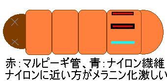 e0160319_12171216.jpg