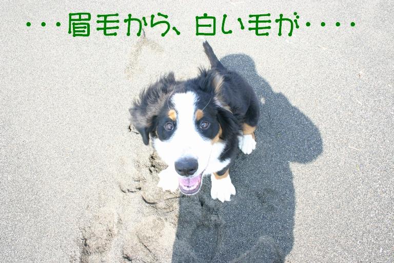 f0194048_843710.jpg