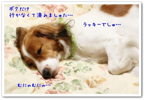 d0013149_801868.jpg