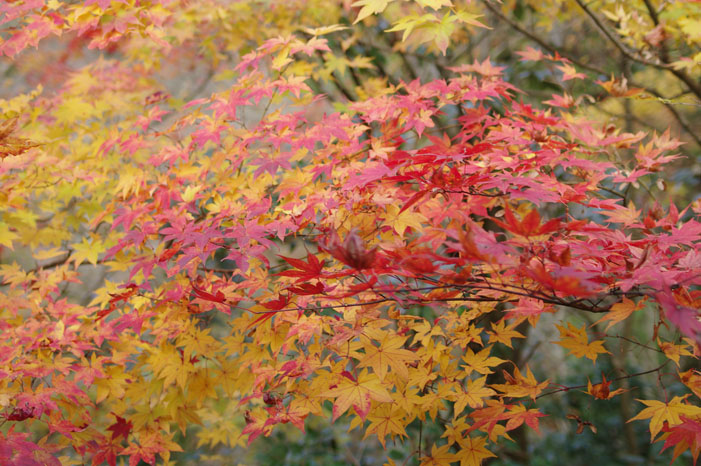 秋写真シリーズ Ⅱ ~叡山電車でGO~_f0152550_21492656.jpg