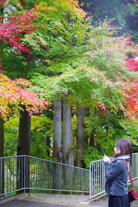 秋写真シリーズ Ⅱ ~叡山電車でGO~_f0152550_21511650.jpg