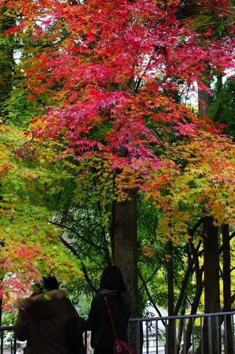 秋写真シリーズ Ⅱ ~叡山電車でGO~_f0152550_21512866.jpg