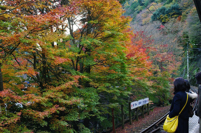 秋写真シリーズ Ⅱ ~叡山電車でGO~_f0152550_2154434.jpg