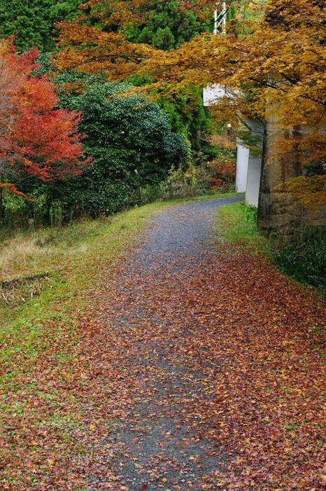 秋写真シリーズ Ⅱ ~叡山電車でGO~_f0152550_21545737.jpg