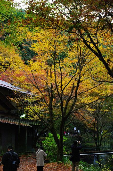 秋写真シリーズ Ⅱ ~叡山電車でGO~_f0152550_21565052.jpg