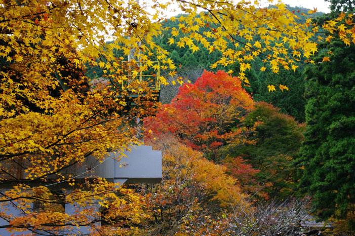 秋写真シリーズ Ⅱ ~叡山電車でGO~_f0152550_2156639.jpg