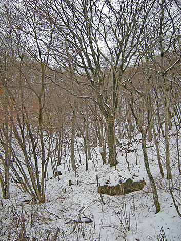 11月27日 お山の雪を確かめに・・・_a0001354_18573261.jpg