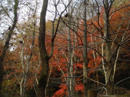 武田尾桜の園「亦楽山荘」紅葉狩り_c0108460_21484413.jpg