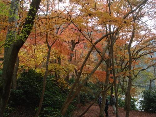 武田尾桜の園「亦楽山荘」紅葉狩り_c0108460_21512459.jpg
