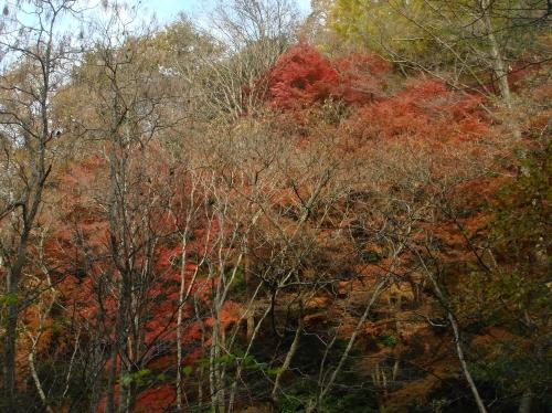 武田尾桜の園「亦楽山荘」紅葉狩り_c0108460_21524355.jpg