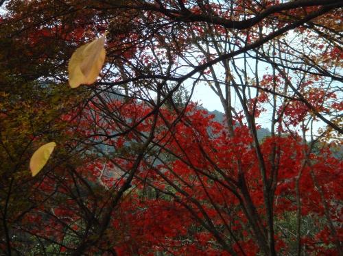 武田尾桜の園「亦楽山荘」紅葉狩り_c0108460_21533014.jpg