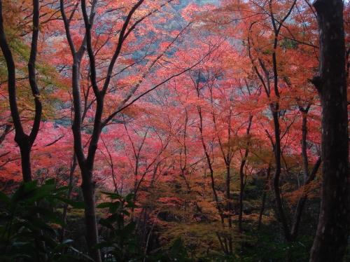 武田尾桜の園「亦楽山荘」紅葉狩り_c0108460_21541941.jpg