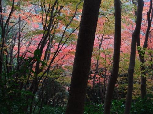 武田尾桜の園「亦楽山荘」紅葉狩り_c0108460_21544380.jpg