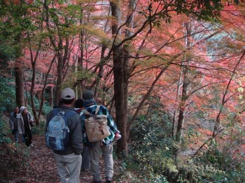 武田尾桜の園「亦楽山荘」紅葉狩り_c0108460_21555067.jpg