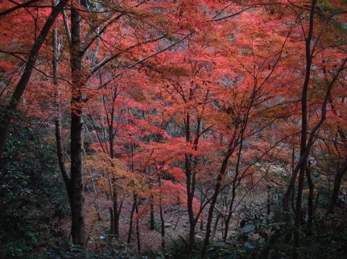 武田尾桜の園「亦楽山荘」紅葉狩り_c0108460_21561233.jpg
