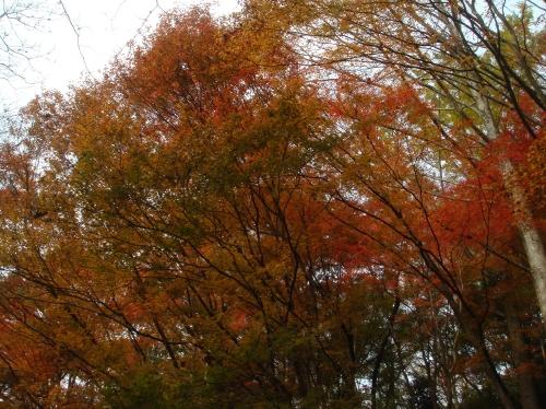 武田尾桜の園「亦楽山荘」紅葉狩り_c0108460_21564168.jpg