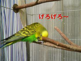 f0196665_231540.jpg