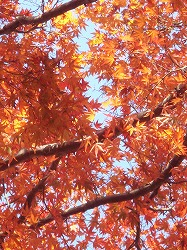 季節の色_e0045977_12261260.jpg