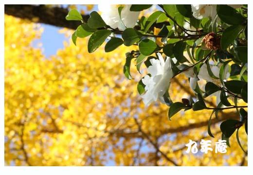 f0189385_2182072.jpg