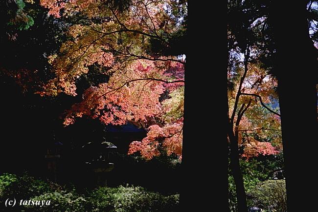 Nov.  27  (Thu)   紅葉 2_f0139991_21313352.jpg