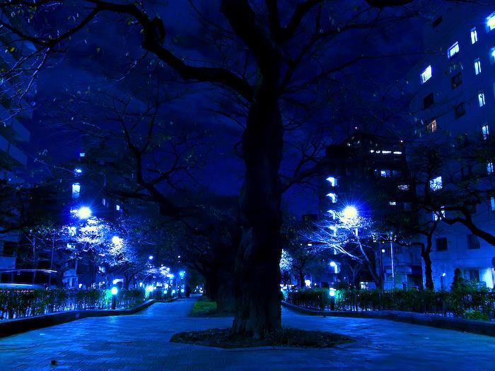 播磨坂の桜並木。_e0139093_1956890.jpg