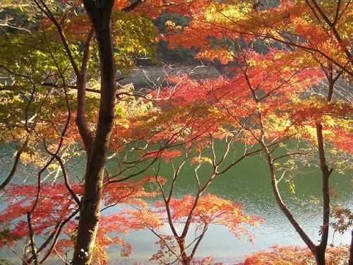 神戸の山の紅葉_b0051598_2244154.jpg